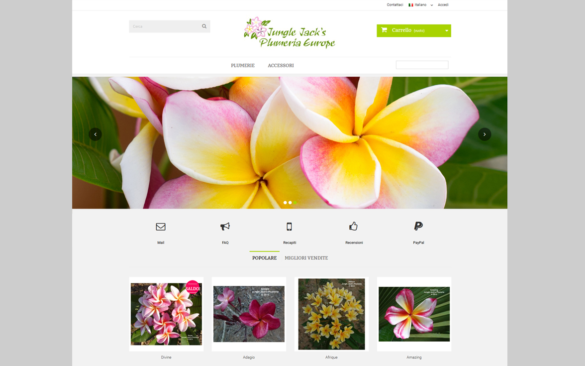 Jungle Jacks Plumeria Europe